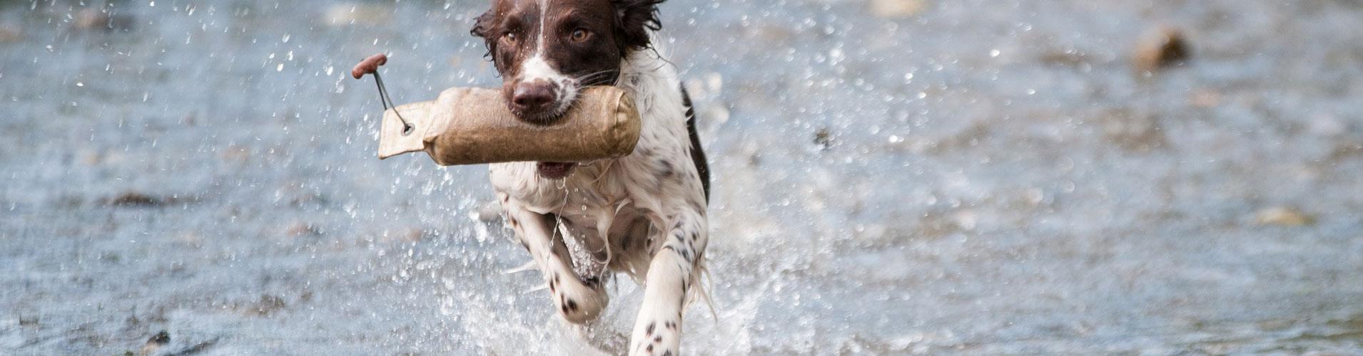 gehoorzaamheidscursus-honden