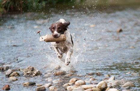 hond rennend door meer met zak in zijn bek
