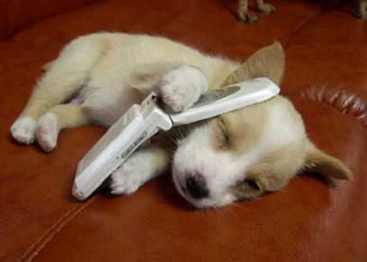 dog-cellphone