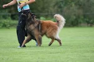 hondenbegeleiding
