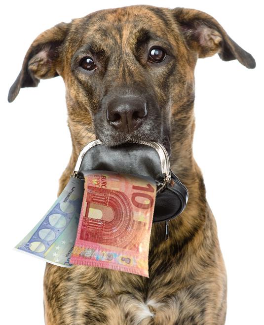 hond-met-geld