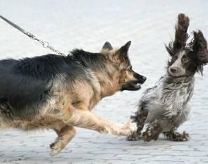 aanvallende hond